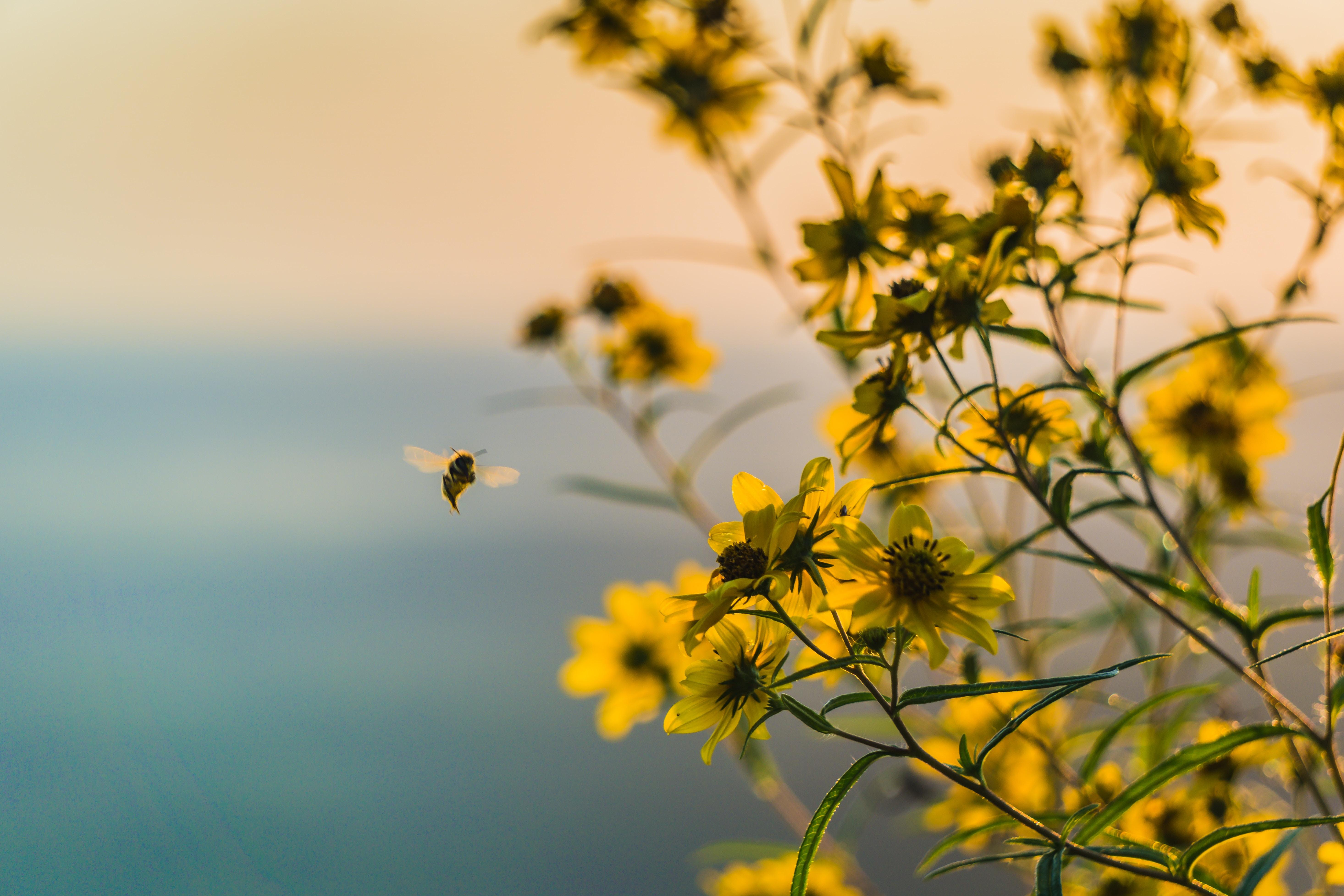 Alle Infos Rund Um Das Thema Insektensterben Gr 252 Ne