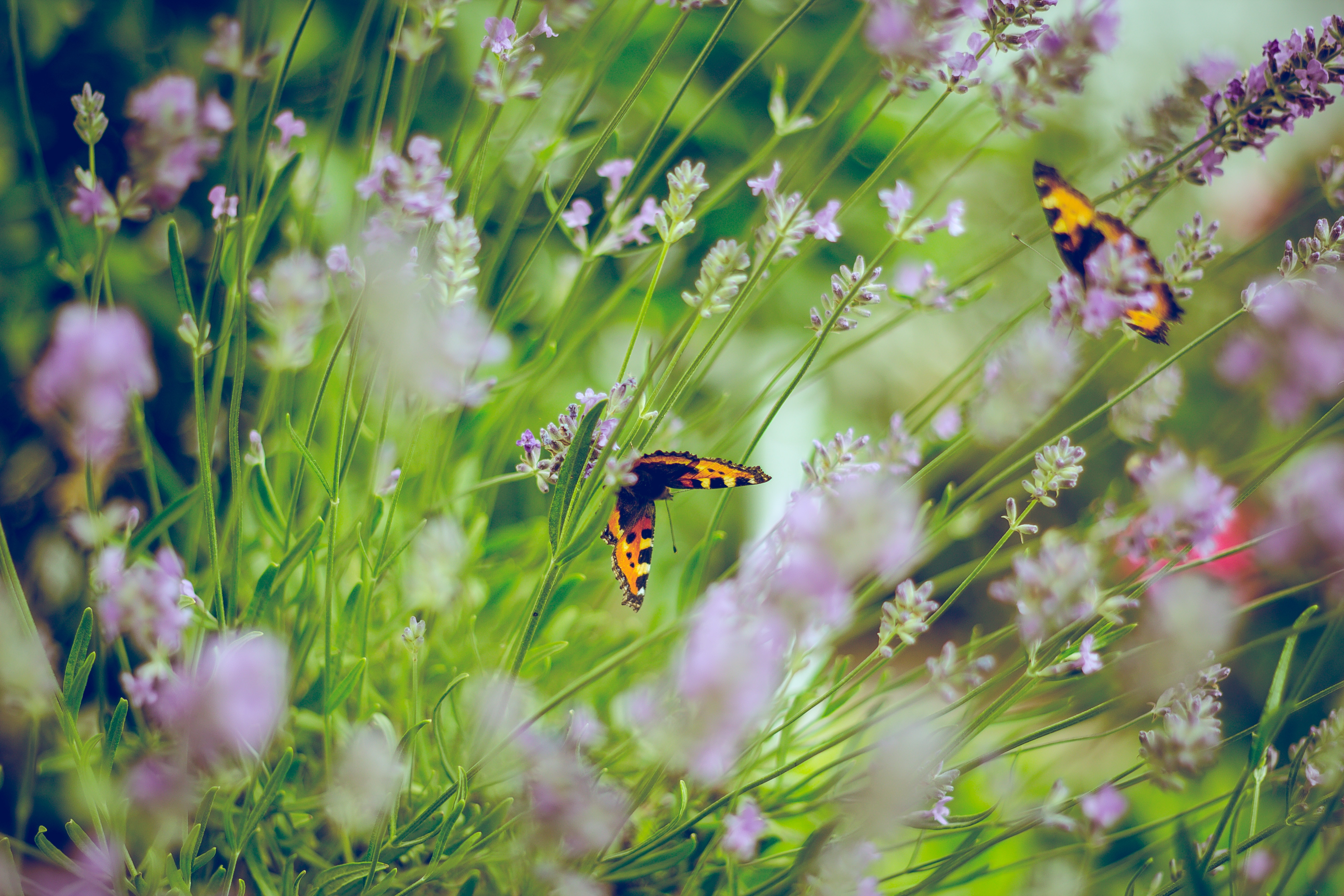 insektensterben in deutschland