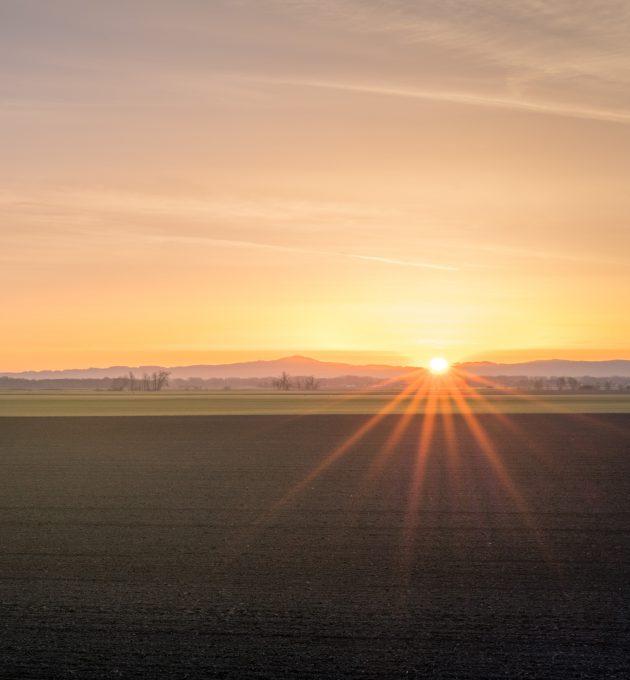 Ein landwirtschaftliches Feld bei Sonnenuntergang. Die Umwandlung der Landschaft durch industrielle Landwirtschaft ist eine der Ursachen für Insektensterben.