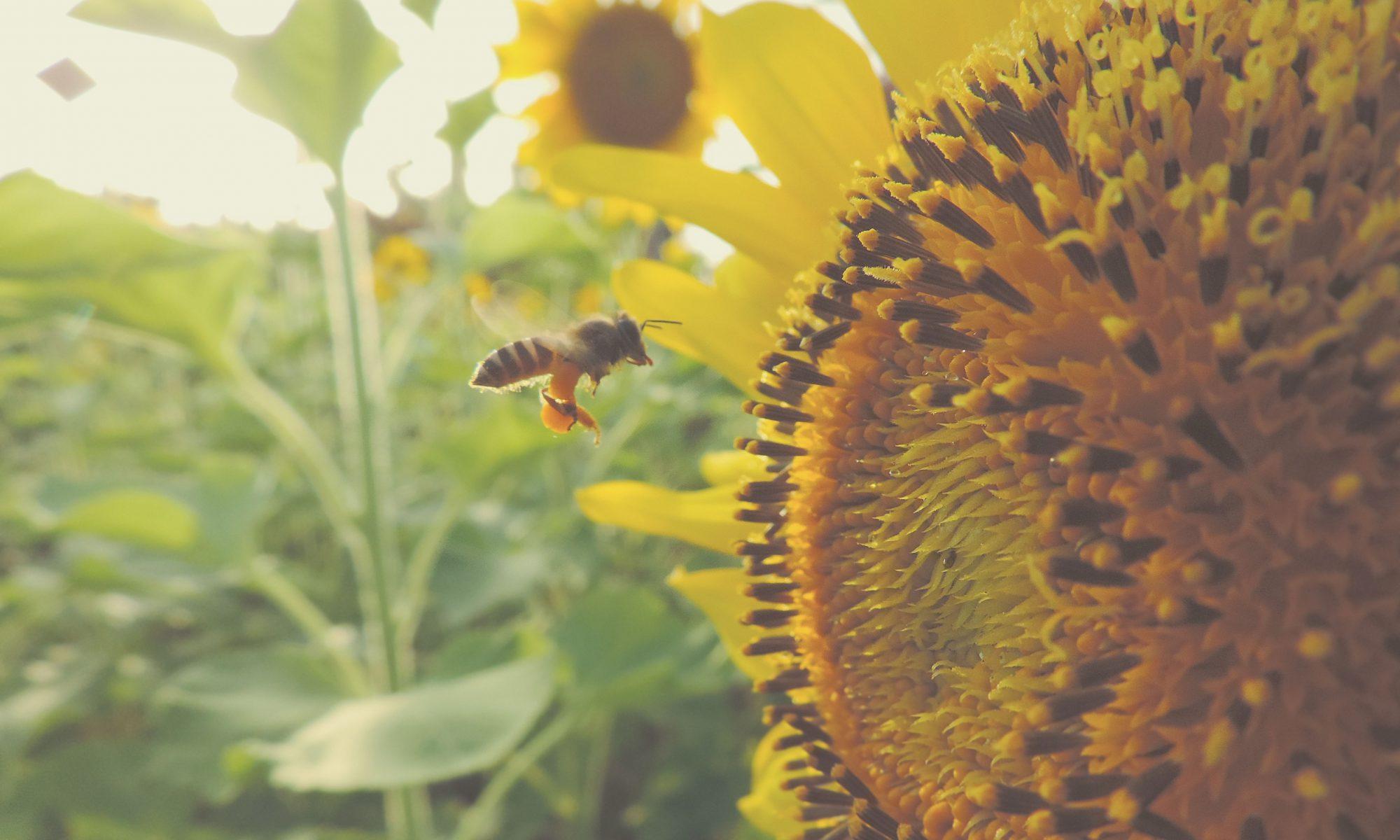 Insektensterben und Artenschwund stoppen fordern die Grünen. Das Massensterben von Bienen und anderen Insekten hat langfristig hohe ökonomische Folgen.