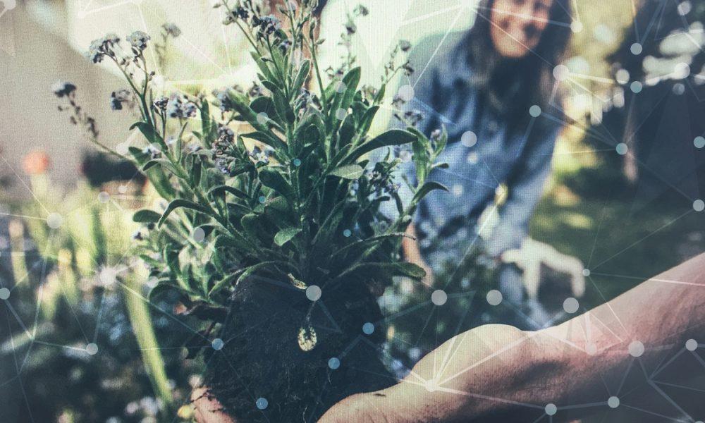 Person hält kleine Pflanze